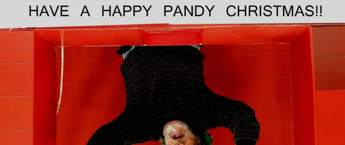 Have A Happy Pandy Christmas!